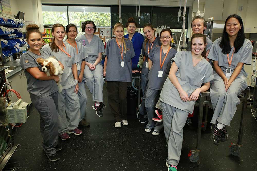 SASH Nurses