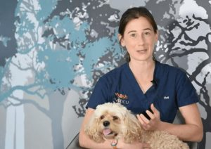 What to do if your pet is vomiting or has diarrhoea