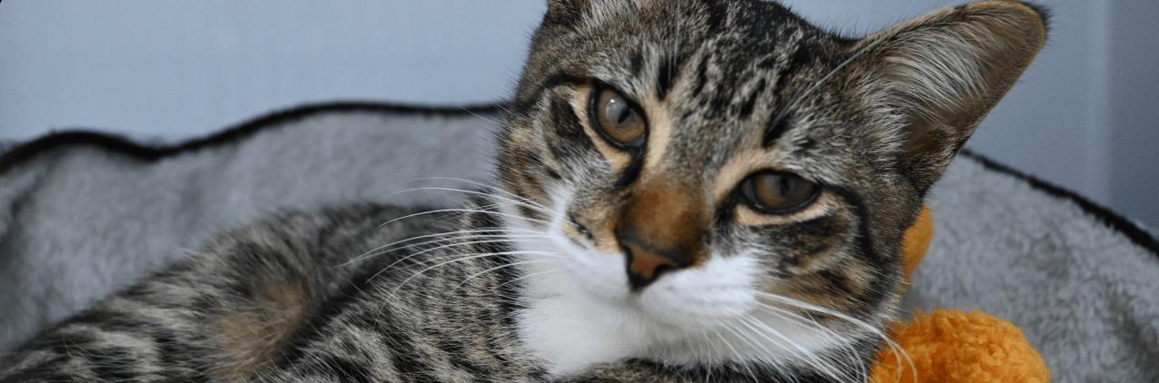SASH cat image