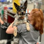 SASH doctor with a dog