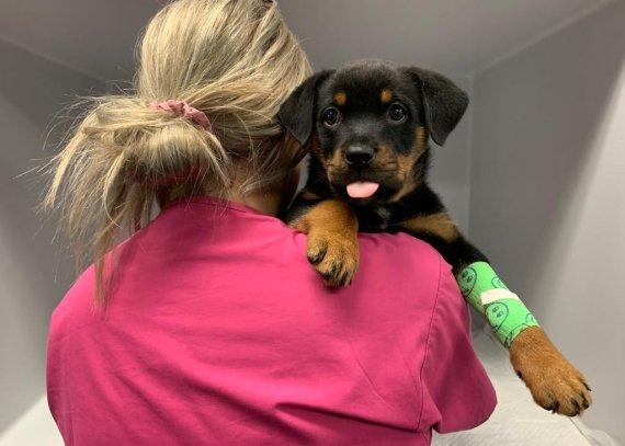 Vet Nurse holding Puppy
