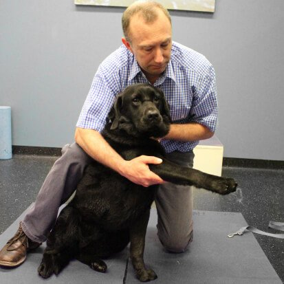 Specialist Physiotherapy for dogs